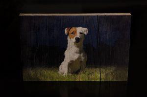 Hundebild
